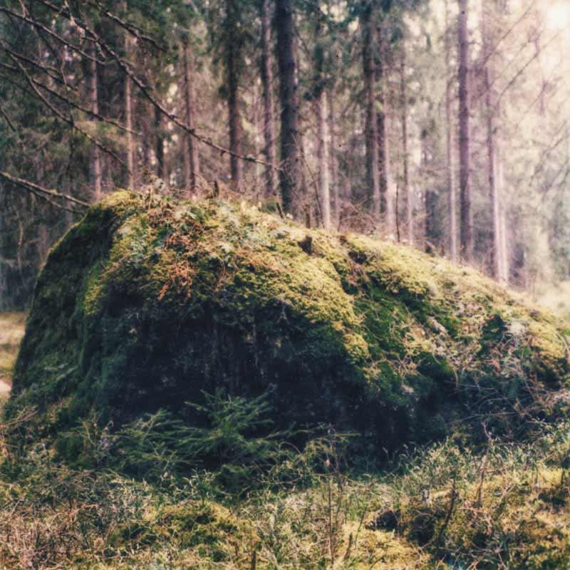 Angst Sessions - Evighetsträd, cover